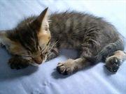 初めて猫を飼いました。