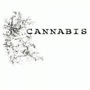 ◆CANNABIS◆