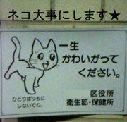 ネコをかわいがる(for gay only)