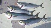 釣り道(瀬戸内海)