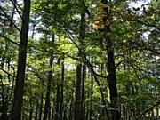 生産環境学科森林生産環境学講座