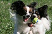 ♪Sapporo Love Dogs♪