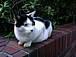 浜松町東芝ビル前の猫を愛でる会