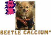 I LOVE 『*BEETLE CALCIUM*』