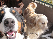 犬、猫を飼うボランティア募集