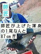 新潟東港なんでかんでん釣り情報