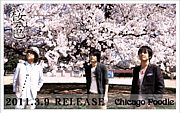 桜色 / Chicago Poodle