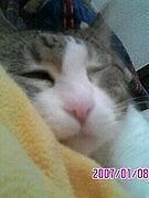 ☆★猫が好き(画像)★☆