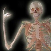 ボーニー[人体骨格模型]