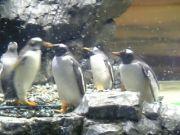 ペンギンが気になる人間
