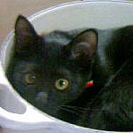 [dir] 黒猫