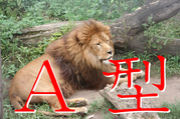A型で獅子座な人の会