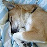 犬と寝る。猫が載る(゚Д゚;)