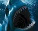 サメと生身で戦ったことがない