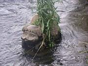 柳瀬川が好き!