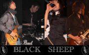 We love BLACK SHEEP