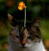 ひたすら花をはりつける