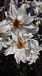 季節の花(今日の1枚)