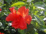 健美の花道