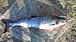 北海道鮭釣り自慢