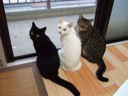 家族は猫♪