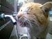 産能 猫を愛する会?