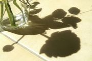 【SLOW LIFE! SLOW PHOTO!】
