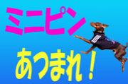 ミニピン神奈川倶楽部111