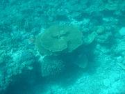 沖縄発☆サンゴ礁ウォッチング