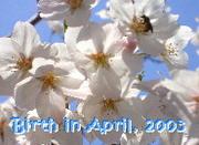 ☆2003年4月生まれ☆
