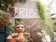 TRIBE ☆トライブ☆