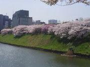 桜を見つけてパチリ