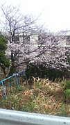 長崎 池島の人 来て