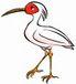 鳥類特別天然記念物を見守る会