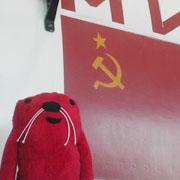 ■赤犬 赤い犬■