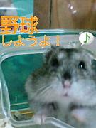 Pleasure〜草野球チーム〜