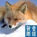 北海道で産經新聞を読む