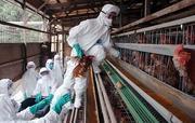 家畜伝染予防法