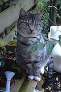 猫×2=ねこ+ねこ