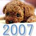 2007年生まれのトイプードル♪