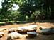 太陽と森の自然学校で遊ぼう!