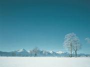 年中、心が冬