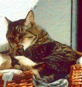 猫と暮らす大人の女