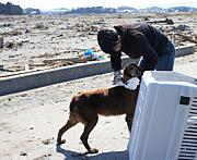 福島被災動物レスキュー