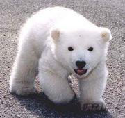 クマを愛する会
